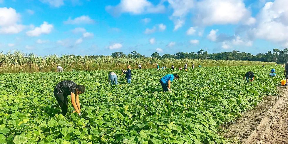 Vegetable Gleaning (1)