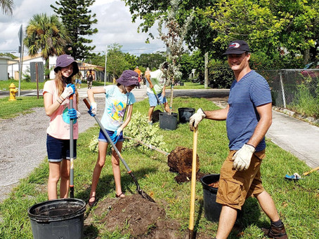 Planting Trees in Lake Worth Beach