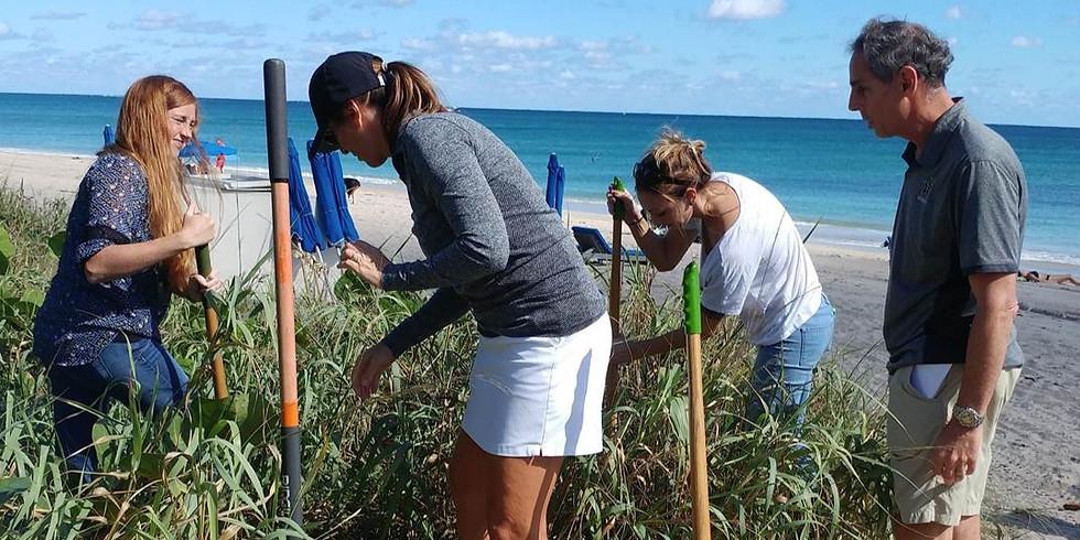 Restoring the Gold Coast