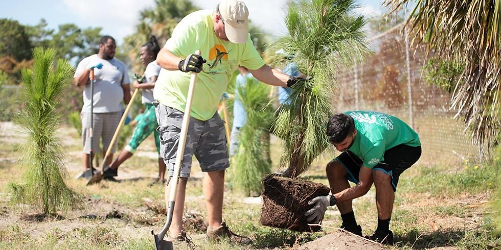 Community Greening Tree Planting