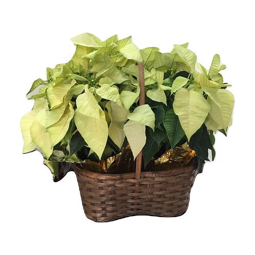 Wicker Red Poinsettia Gift Basket