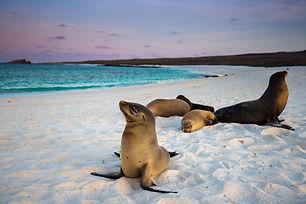 PIC-Galapagos-Sea-Lions.jpg