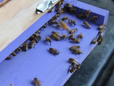 10 actions pour sauver les abeilles en danger d'extinction