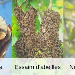 J'ai un nid d'abeilles ou de guêpes à la maison. Quoi faire?