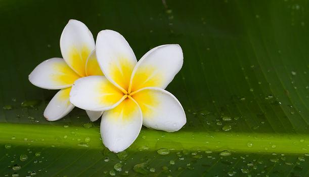 tropica flower