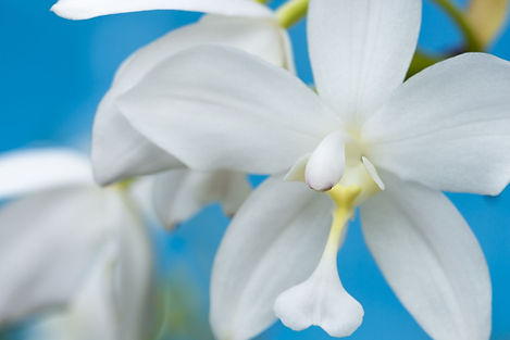 Hawaii Flower