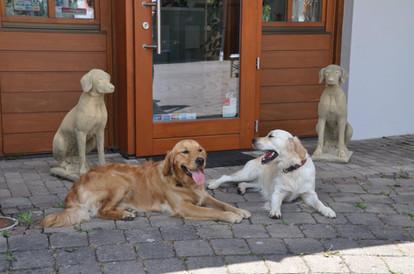 Tierarztpraxis Bad Windsheim.jpg