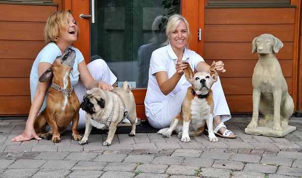 Tierarzt Bad Windsheim