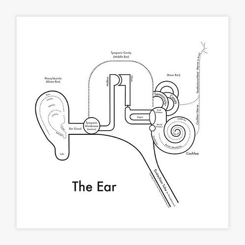 Ear Letterpress Print