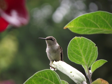 Hummingbirds - One of my favorite things.