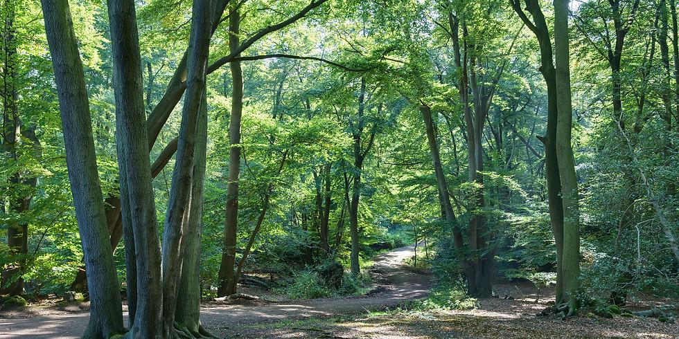 Epping Forest Oak Trail Hike