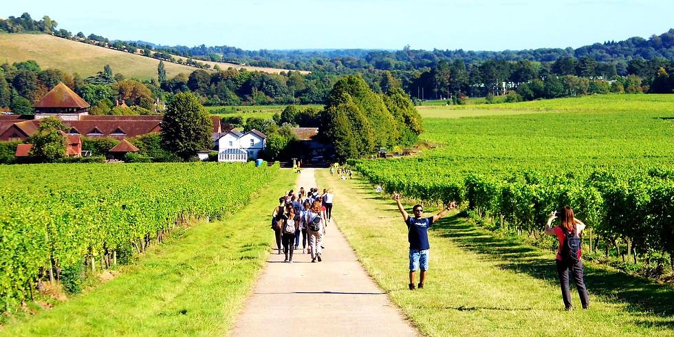 The vineyards of Surrey - hike and wine tasting adventure