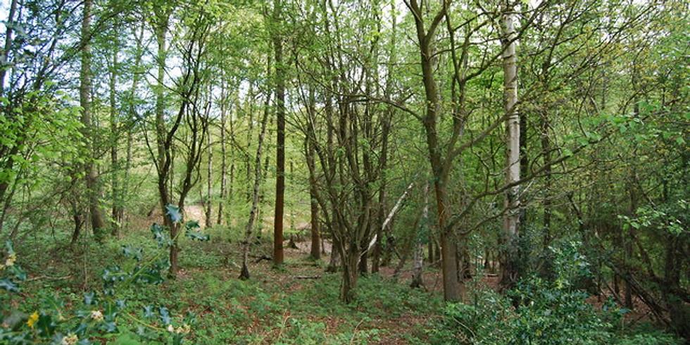 Farnham Hike-Surrey Adventure