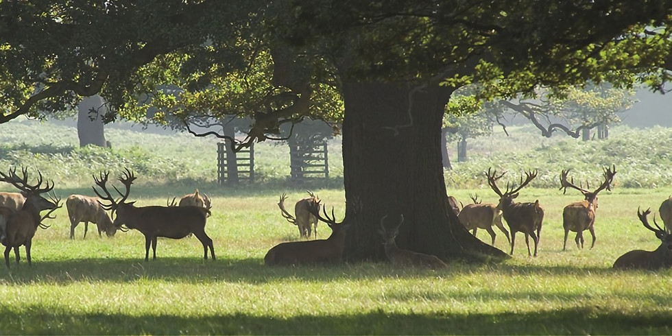 Woburn Abbey Day Hike- Deer Park and Woodlands of Bedfordshire!