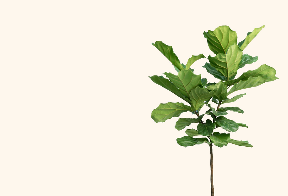 planthero_background_new.png