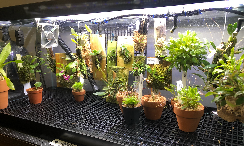 Orchids, growing plants