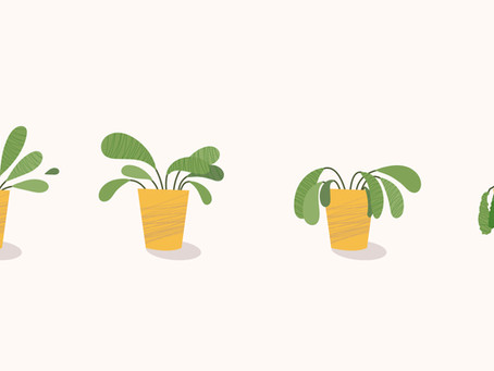 8 Reasons Why Your Plant May Be Dying