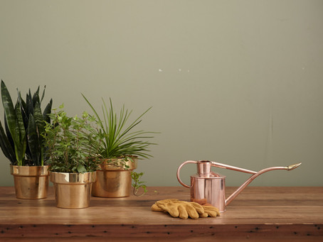 How To Water Your Houseplants Without Killing Them