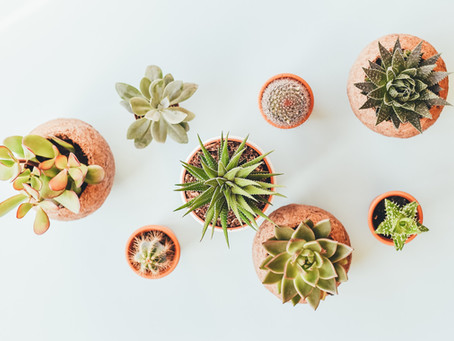 7 Simple Tactics To Keep Your Succulents Happy and Healthy