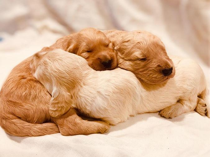 cuddled.jpg