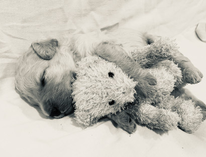 11_laying with teddy.jpg