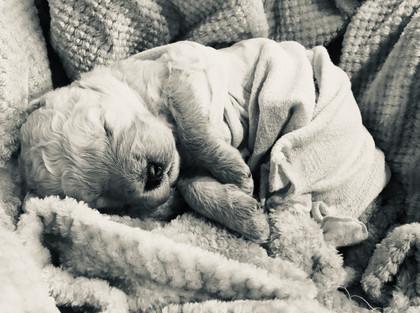9_cuddled in blanket.jpg