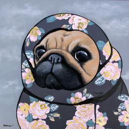 Pug On A Blanket