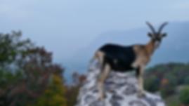Cinemagraph | Tiere | Südtirol