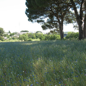 Agriparc du Mas Nouguier – Montpellier