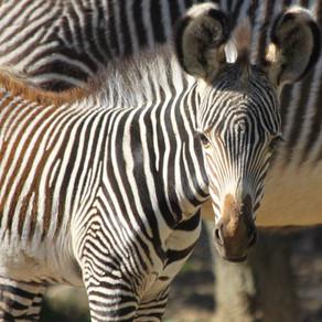 Le Zoo du Lunaret - Montpellier
