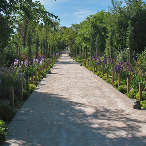 Parc du Belvédère – Montpellier (Quartier Ovalie)