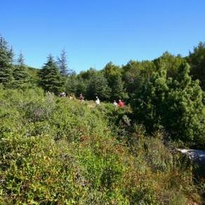 Balades Nature - Frontignan