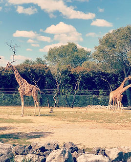 zoo montpellier.jpg