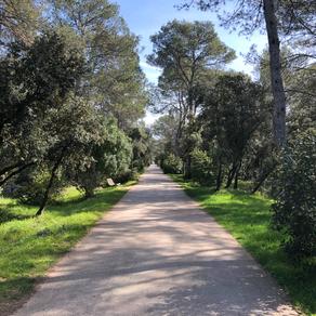 Bois de Montmaur – Montpellier