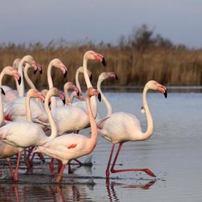 Parc Ornithologique du Pont de Gau – Saintes Maries de la Mer