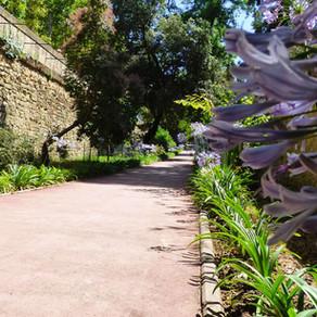 Le jardin des plantes - Montpellier