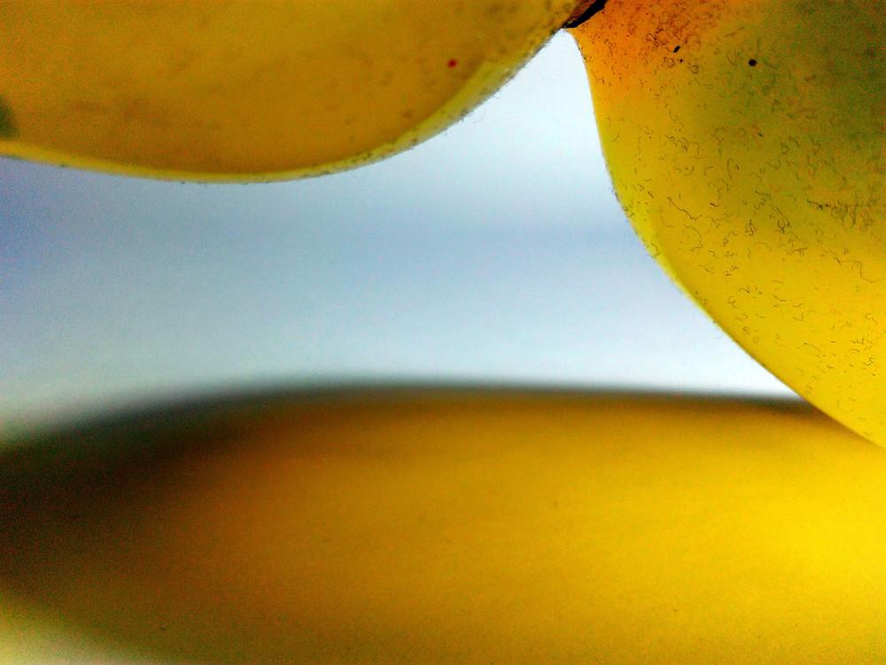 erotic looner yellow, photography, 2017