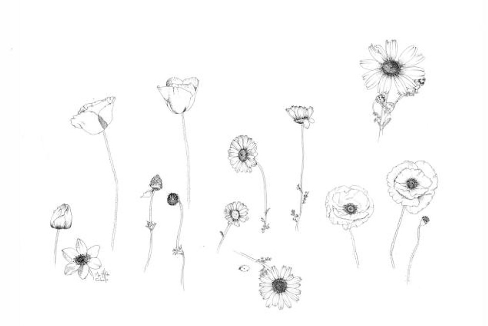 flora - daisies