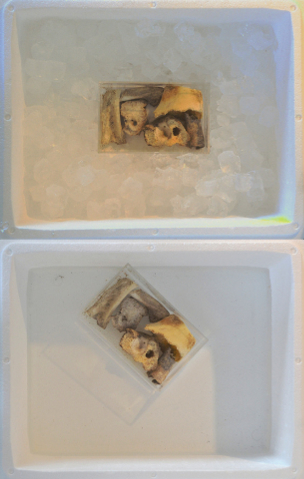 Συντήρηση, 50 Χ 18 cm, κόκκαλα, πάγος, ισοθερμική συσκευασία, plexiglass, 2017