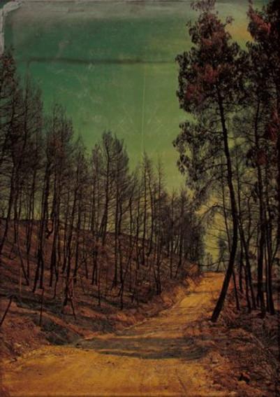 Μια φορά κι έναν καιρό ήταν ένα όμορφο δάσος