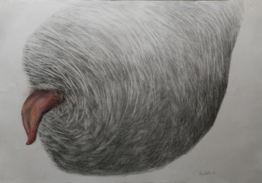 cocoon tongue - 50X70 - color pencils on paper - 2018