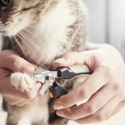 We can cut your cat's nails