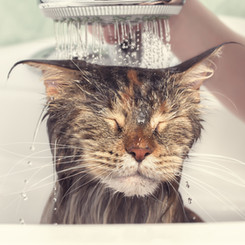 We can give your cat a bath