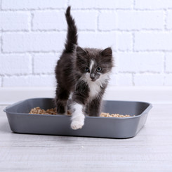 We can help with litter box issues