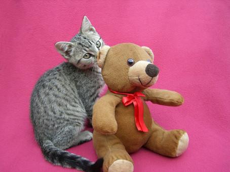 What's a Teddy Bear Trim?