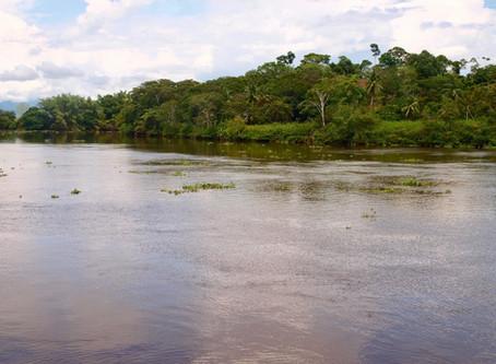 Flyfish the Sierpe River in Costa Rica