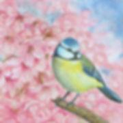 Bluetit in blossom tree