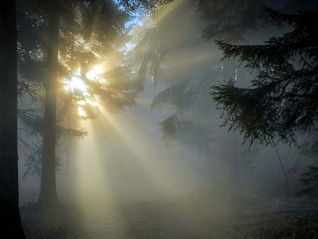 Neue Wege gehen! Hingabe, Liebe und Fürsorge statt Anklagen, Aufregen und Kämpfen!