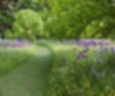 bloemenweide met bloembollen.jpg