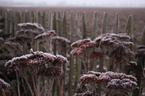 L'hiver au jardin